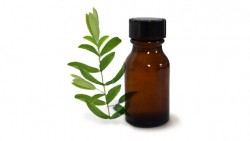 Tea tree oil to remove blackheads