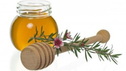 Tea tree oil to rid out of lice