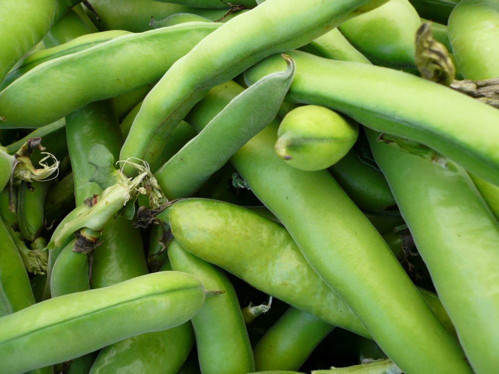 Benefits and nutritional value of Fava beans