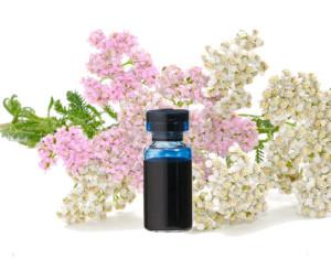Benefits of yarrow essential oil