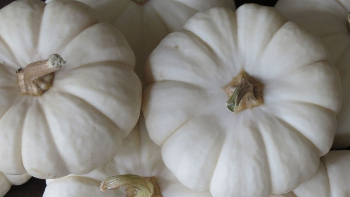 How to Lose Weight with White Pumpkin  Juice?