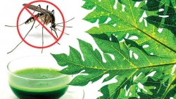Healthy Diet Tips for Dengue Patients