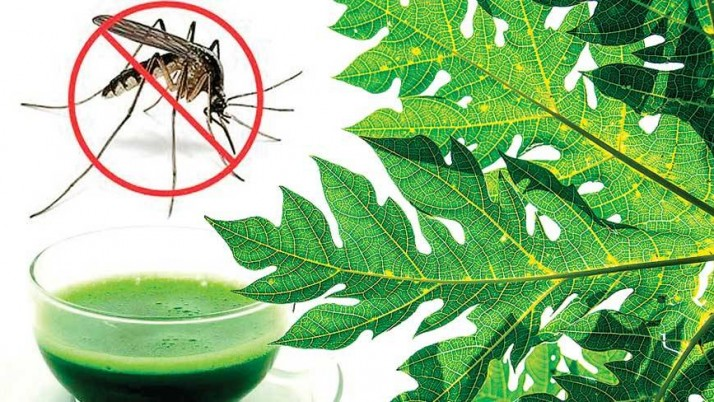 Healthy Diet Tips for Dengue Patients