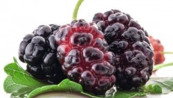 Amazing Benefits Of Boysenberries