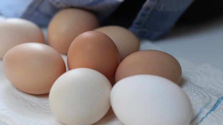 Egg Protein Chart
