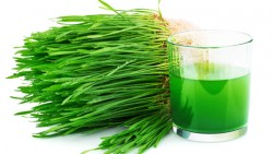 Everything You Need To Know About Wheatgrass Diet