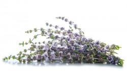 Benefits of pennyroyal oil