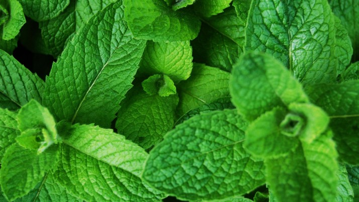 CAN MINT LEAVES HELP CURE ACNE SCARS