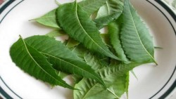 Is Neem Effective To Treat Acne?