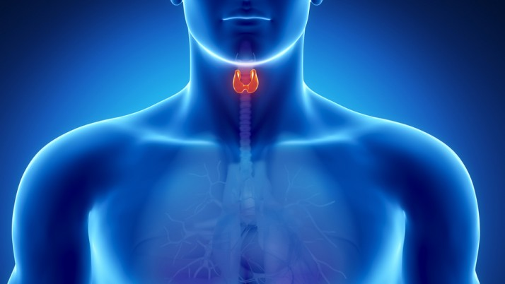 Be Aware: These Daily Products Harm the Thyroid Gland