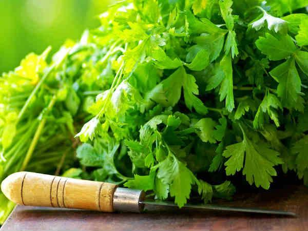 Unknown Health Benefits Of Parsley