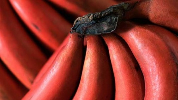 HEALTH BENEFITS OF RED BANANA