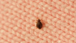 How To Get Rid Of Bed Bugs Quickly