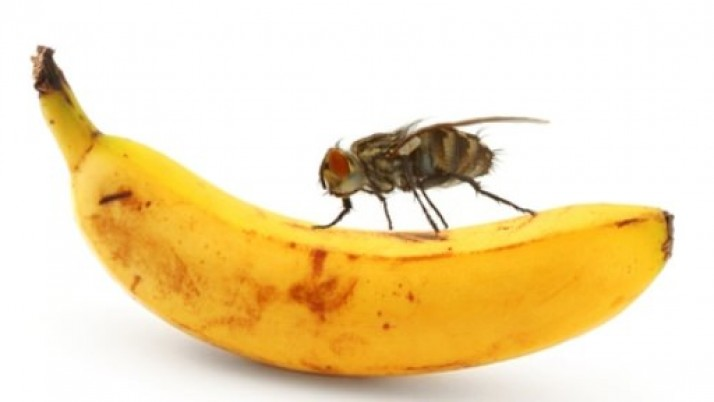How to get rid of fruit flies fast?